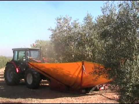 Agitado de los Olivos. Agrodesarrollo - Grupo El Fuerte