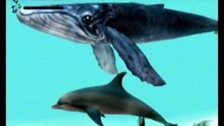 Vidéotest Ecco the Dolphin ( Dreamcast )