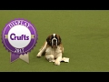 Good Citizen Dog Scheme Display | Crufts 2017
