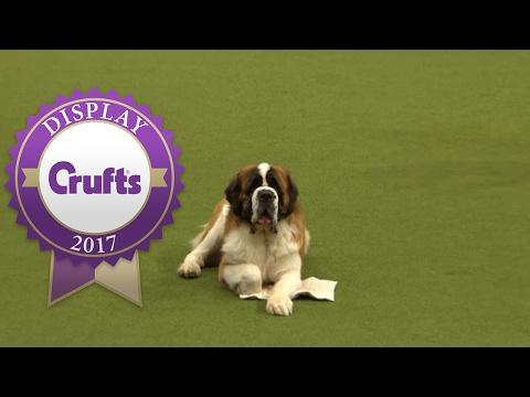 Good Citizen Dog Scheme Display | Crufts 2017