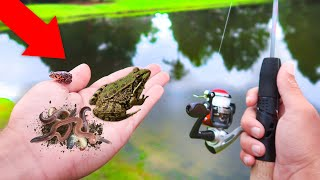 Finding FROGS & GRUBS For LIVEBAIT Fishing Challenge (WALMART)