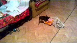 Тойчик 2 месяца насилует свою игрушечную собаку