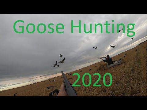 North Dakota Goose Hunting 2020 (BIRDS EVERYWHERE!!)