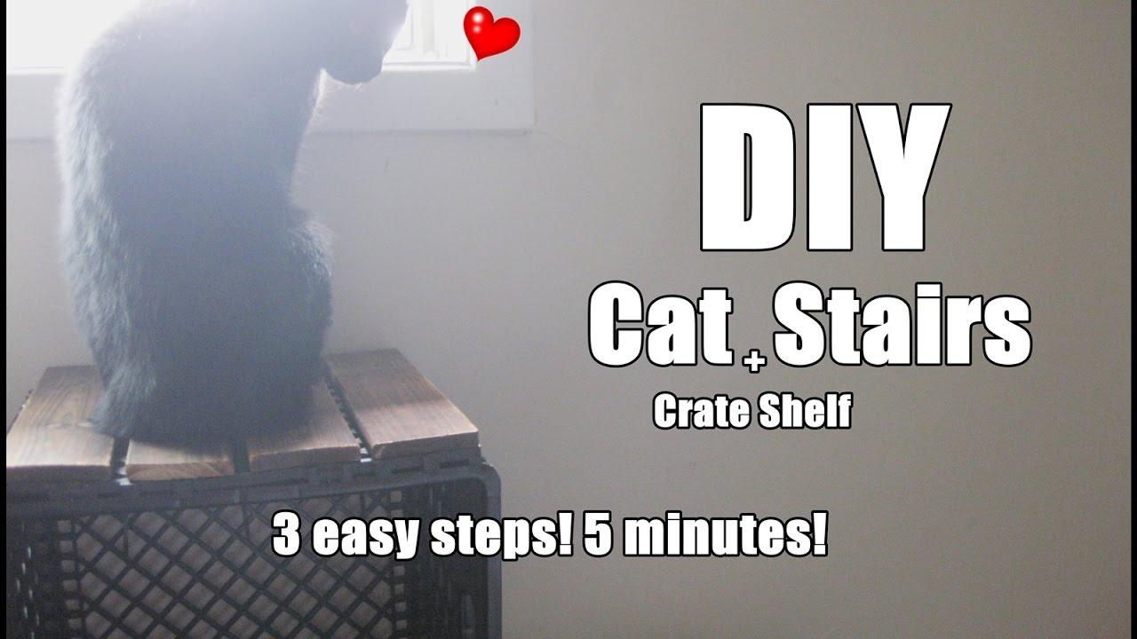DIY : Cat Stairs + Crate Shelf - YouTube