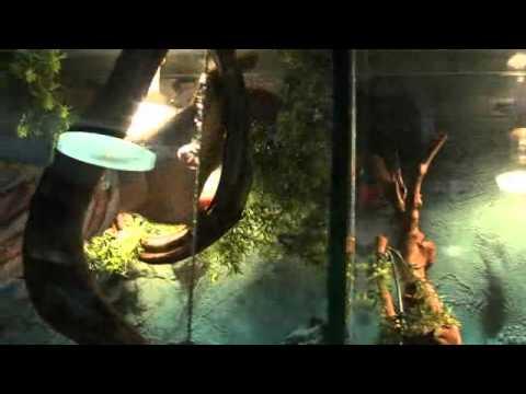 Gilly Zoo animalerie générale et accessoires