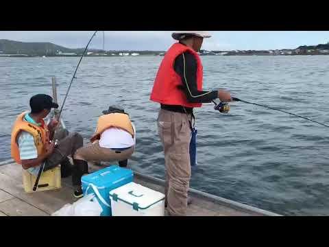 長井 かかり 釣り
