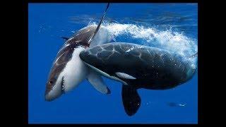바다 최강의 생물