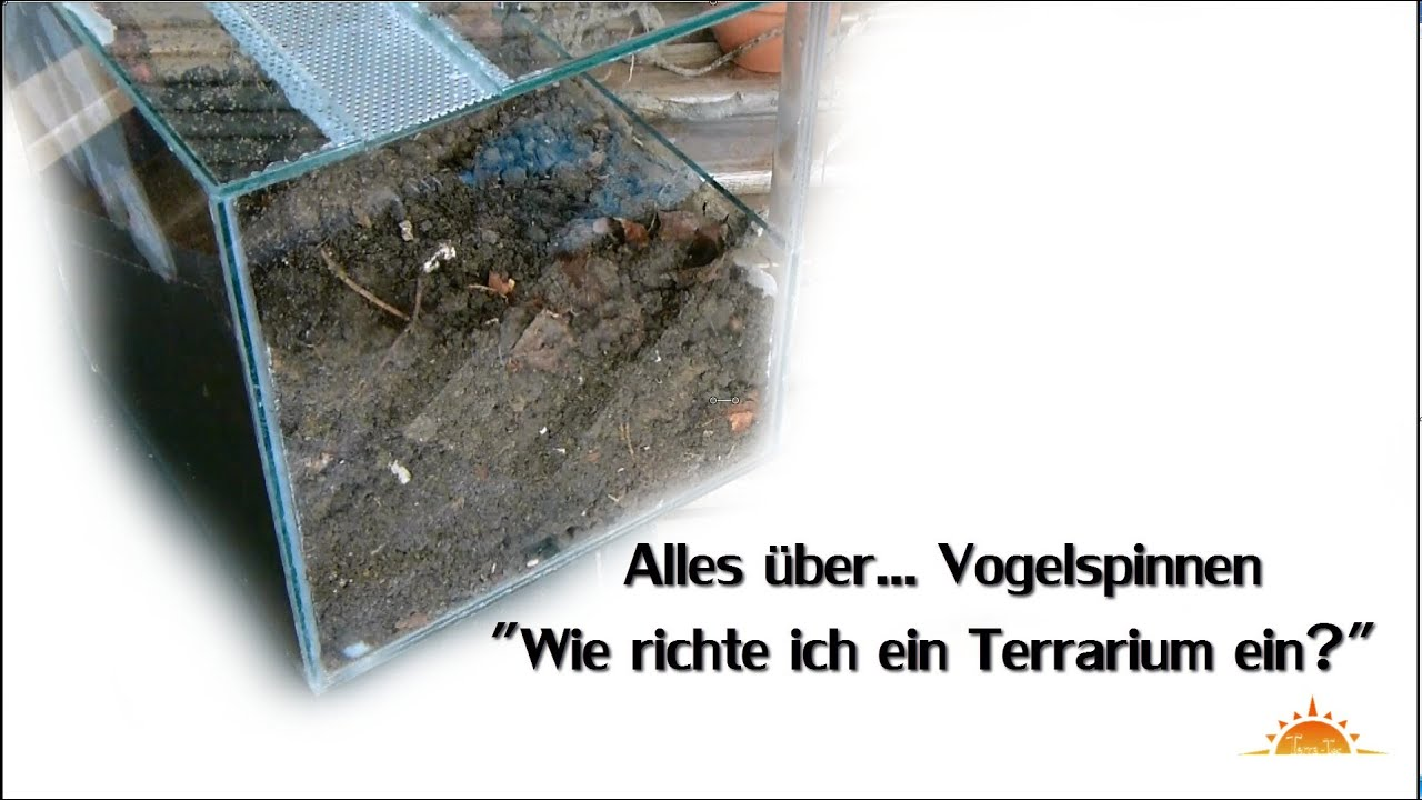 tutorial vogelspinnen terrarium einrichten all about tarantulas hd terra tec youtube. Black Bedroom Furniture Sets. Home Design Ideas