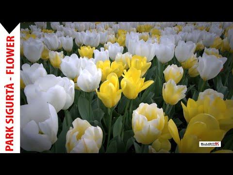 Spring Blulight gallery - park Sigurtà - Italy
