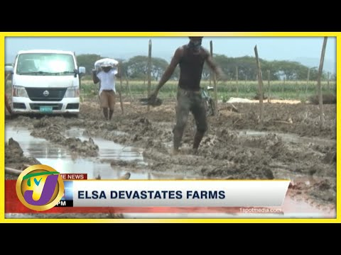 Tropical Storm Elsa Devastates Farms in Jamaica   TVJ News - July 5 2021