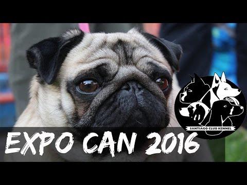 EXPOCAN CHILE 2016 Santiago Club Kennel