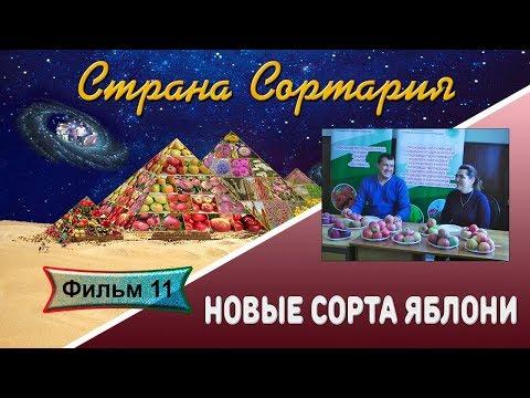 Сортария 11 Новые сорта яблони  Дегустация 1