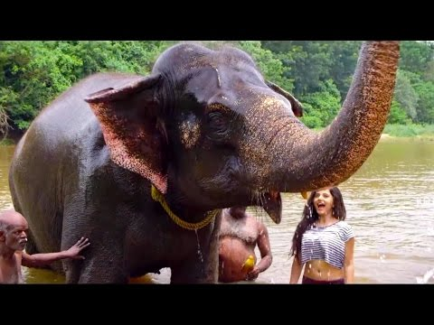 Amazing Kerala | Gods own Country | Elephant | Bestowed with a pleasant and equable climate