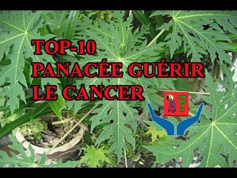 Ung thư-Top-10 panacée contre le cancer.Les feuilles de papaye.