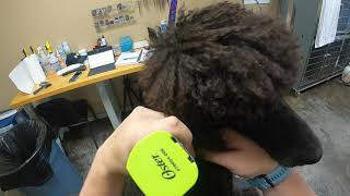 Very Handsome Standard Poodle Therapy Dog | Cut I've NEVER Done Before