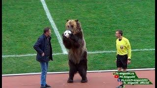 بالفيديو: دب حقيقي يفتتح مباراة كرة قدم في روسيا!