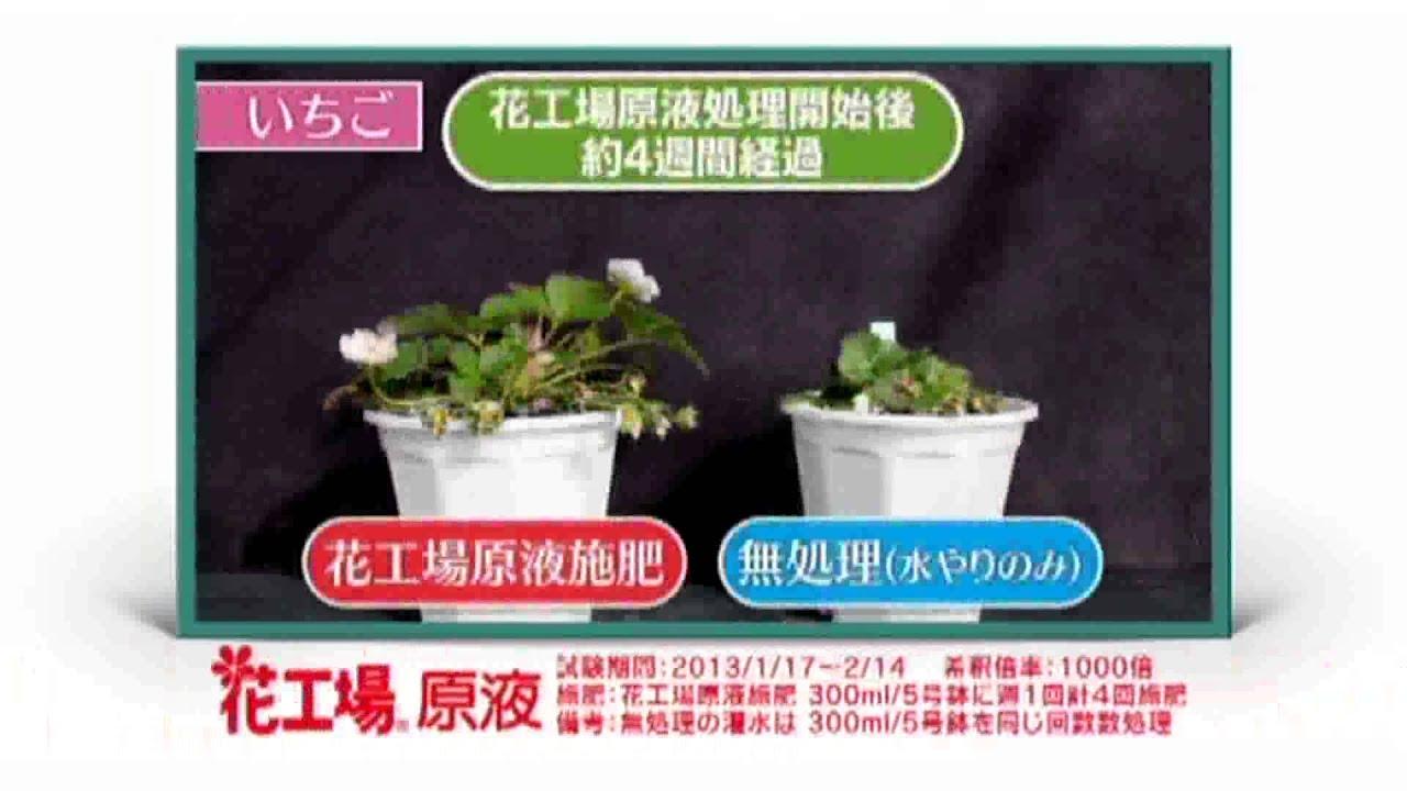 どんな植物にも手軽に使える液體肥料! 【肥料】 - YouTube