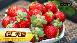 《农广天地》 20190716 高价草莓别样财  CCTV农业
