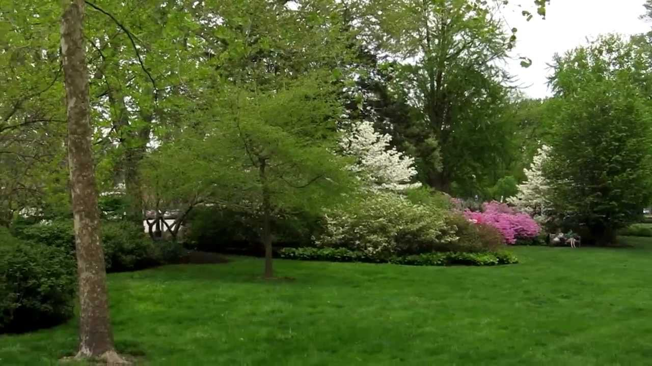 Walking Through the Azalea Garden Behind the Art Museum in ...