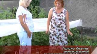 Хороший урожай вопреки неблагоприятным погодным ус...(Луганская область считается зоной рискованного земледелия. Климатические условия и состояние почвы не..., 2010-08-11T05:28:00.000Z)