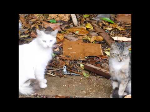 Alley Cats and Dogs Rescue TNR Cats