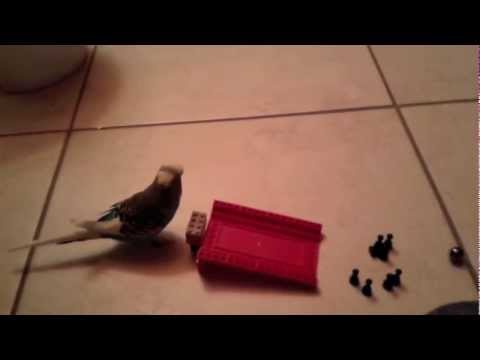 Die Hobbys meines Vogels