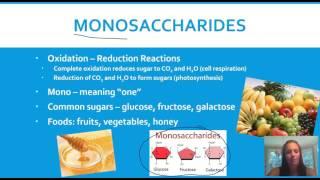Macromolecules - Structure & Function (STEM)