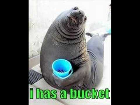 I has a bucket - YouTube