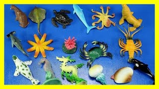 Learn 30 Sea Animals  - Fish Shark Whale Octopus Toys For Kids