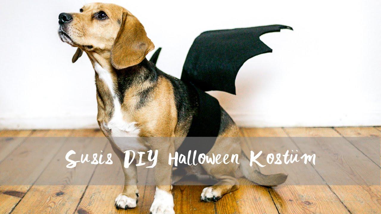 Diy Halloween Hundekostum Fledermaus Unser 1 Diy Video Mit Liz
