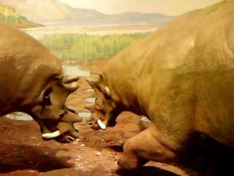 Prehistoric sabre tooth Rhinos at a water hole-miocene era