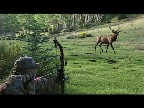 Deer Hunting With Bow And Arrow