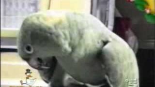 Funny Parrot Talking Baby Stuff