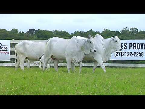 LOTE 86   FHGN A 1181, 1270, 698, 921
