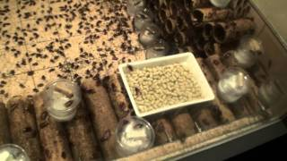 30秒の心象風景582・ゴキブリの部屋~害虫の研究所~.m2ts