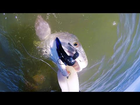 Fishing Saltwater With What Bait? CHATTERBAIT