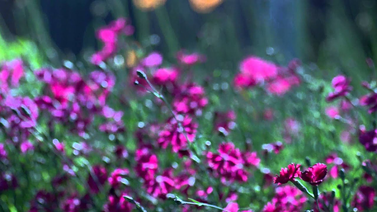 Полевые цветыЦветы
