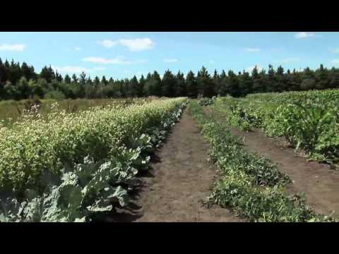 Northern Grown:How is Thunder Bay Feeding Itself?