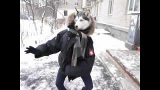 15 минут танцующей собаки
