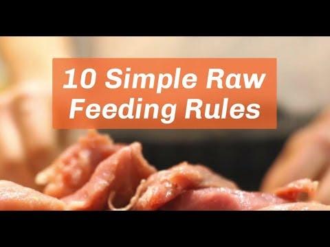 10 Easy Tips For Feeding Raw Dog Food