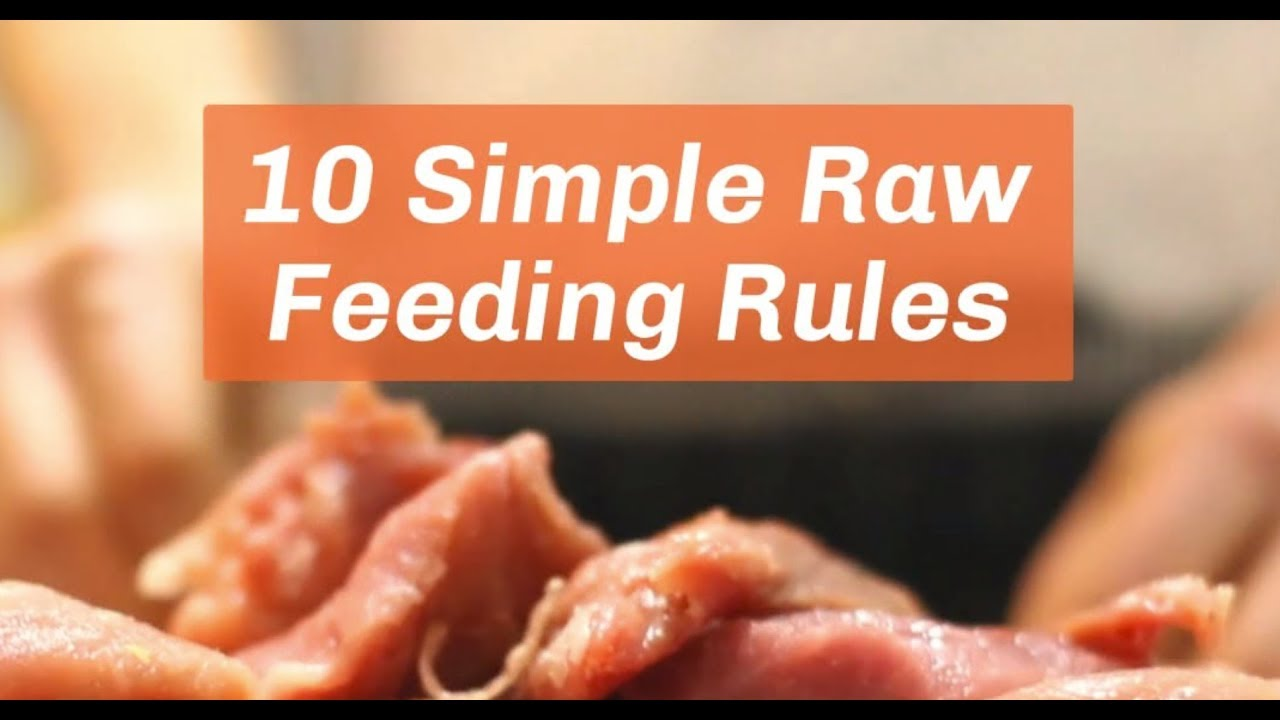 Raw Feeding Primer: 10 Simple Rules To
