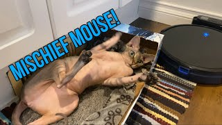Mischief Mouse Leaves The House (Happy Rue Year!)