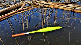 КАК КРАСИВО ОНИ ВЫКЛАДЫВАЮТ ПОПЛАВОК, Ловля карася, карась на удочку, рыбалка на поплавок, Карась