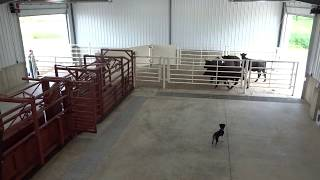 Bud Box - Designed After Bud Williams Design For Cattle Handling