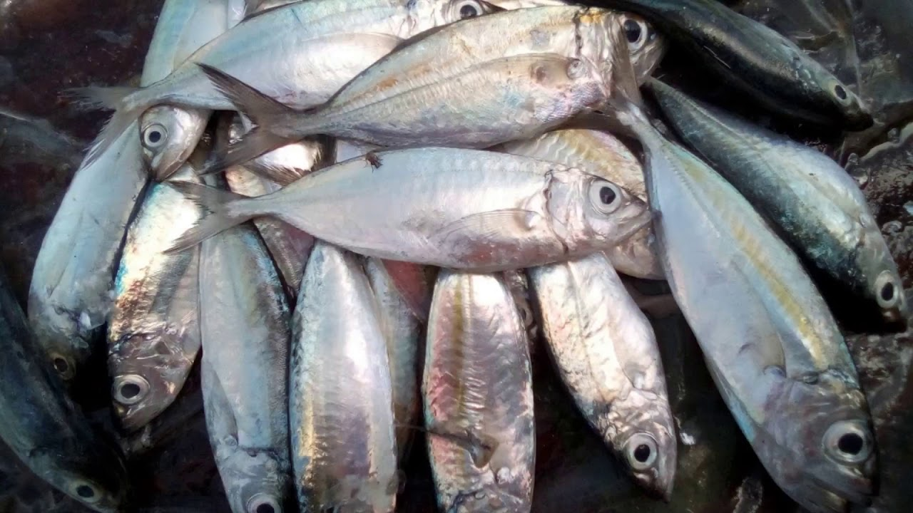 Philippines Different Kinds Of Fish Part 1 Youtube