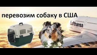 Перевозка собаки в Америку. Люфтганза. Заселение в апартаменты с животным