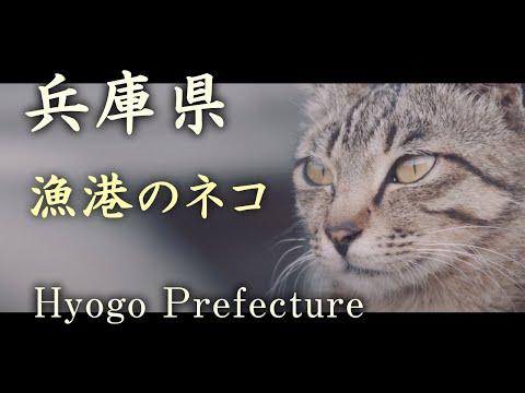 Cat of fishing port (a6500)