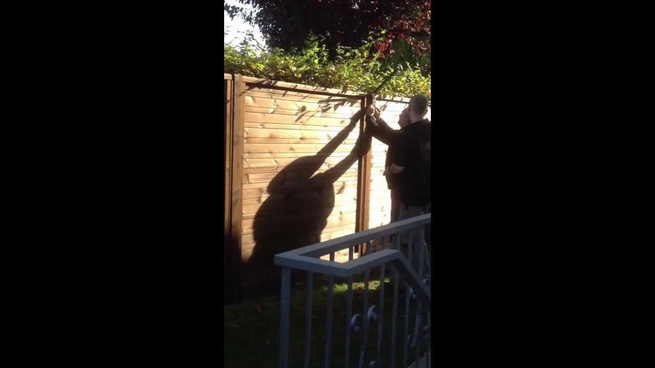 Katzennetze Montage an einem Gartenzaun