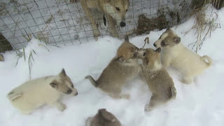 ВСЕ и щенки!!!! нам уже 1 мес и 10 дней!!!