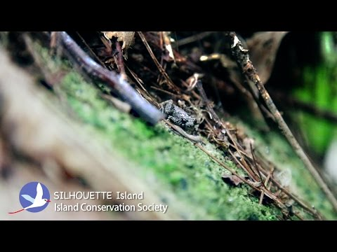 SILHOUETTE Island, Seychelles - Documentary Videos - Claire Obscuur